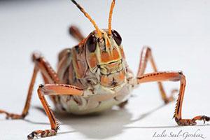 مكافحة الحشرات والسوس