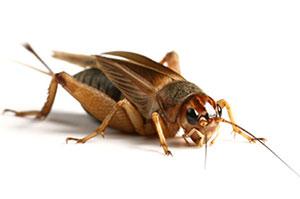 مكافحة الحشرات والبراغيث